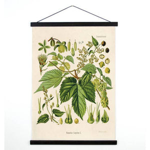 "Beer Hop Flower Canvas Wall Hanging - 13"" x 17"""