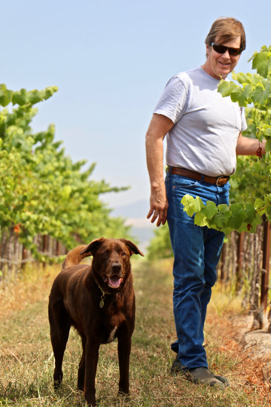 Cooper the dog with Norm in the Vineyard