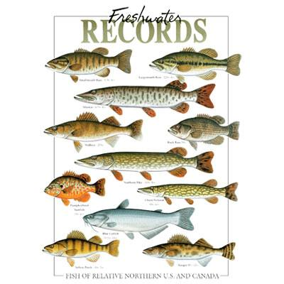 Freshwater Fish Records T-Shirt