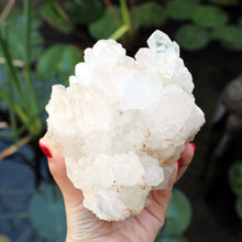 Load image into Gallery viewer, Clear Quartz Cluster - Spiritual Nexus