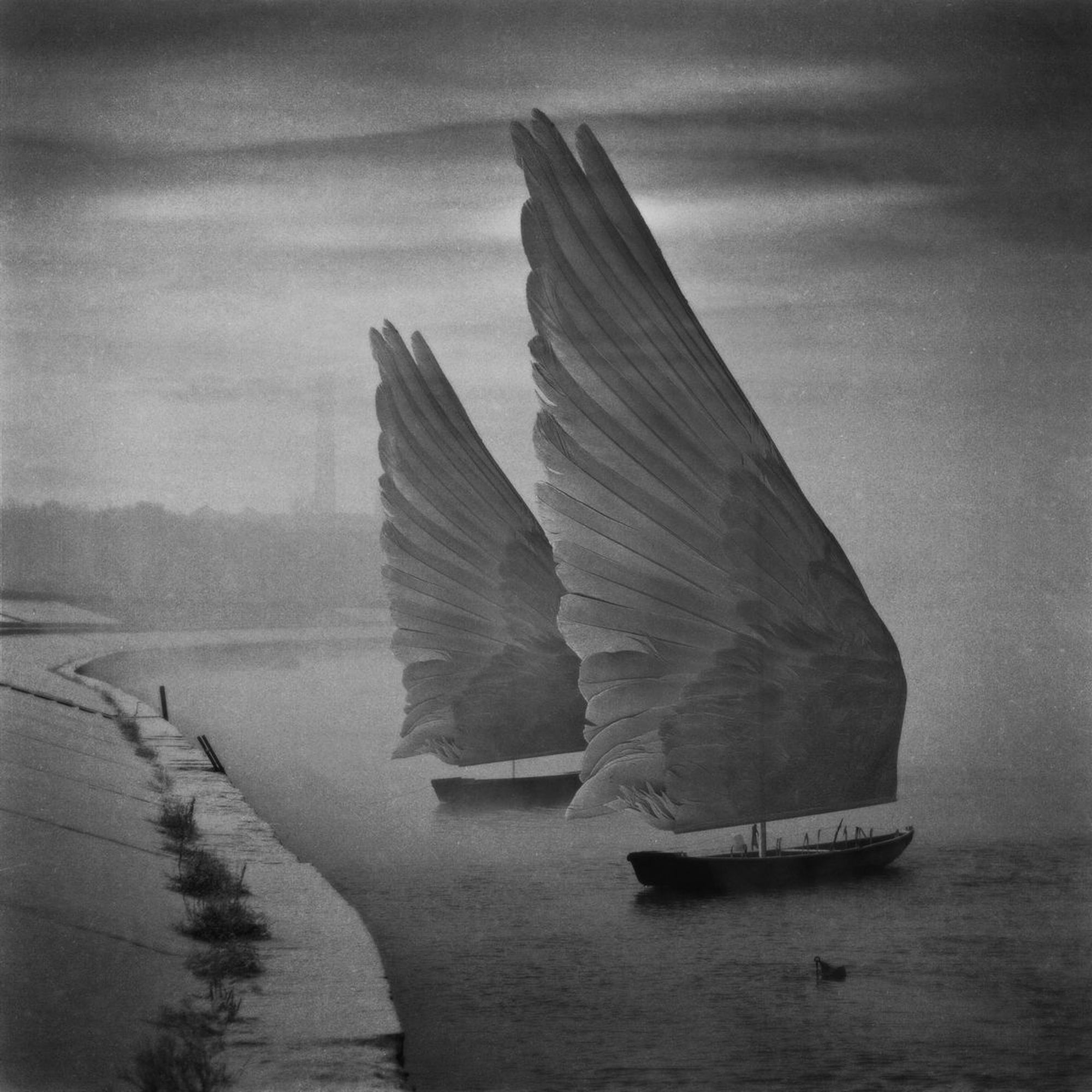Wings of Imagination by Dariusz Klimczak