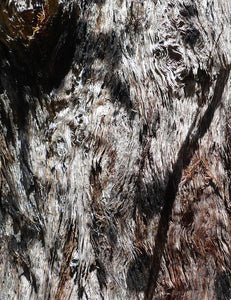 Stringybark, close-up [Image credit: hayleyandwill, Wordpress]