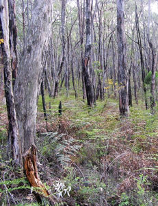 Stringybark forest, Mark Oliphant Conservation Park [Image credit: walkingsa.org.au]
