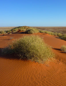 Simpson Desert dunes with vegetation [Image credit: Christopher Watson, Wikimedia]