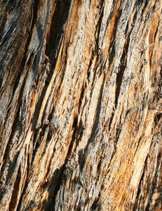 Stingybark, close-up [Image credit: Arthur Chapman]