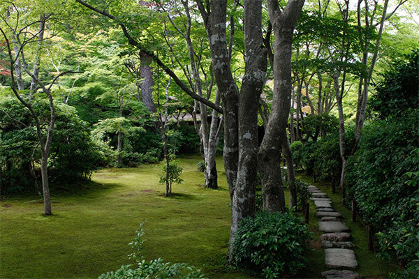sibella-court-nomad-Japan-garden
