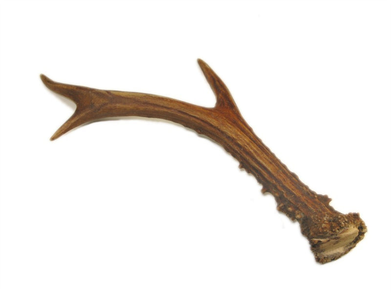 What Are Deer Antlers?