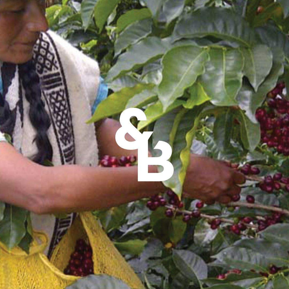 Load image into Gallery viewer, image of Colombian coffee picker