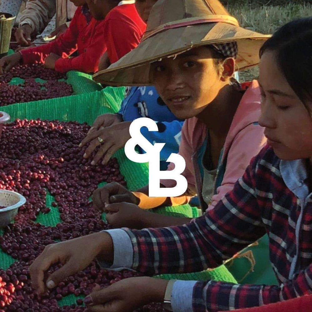 Load image into Gallery viewer, Image of Myanmar Shwe coffee farmers