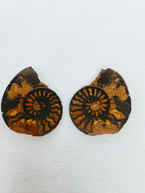 Ammonite Fossil Pair