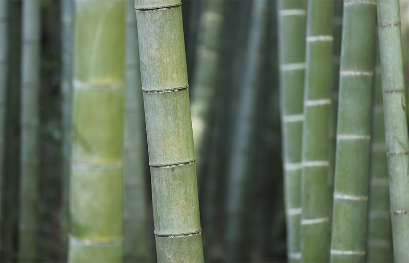 Some amazing facts about bamboo