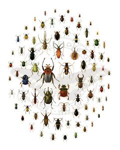 A Love of Beetles Poster