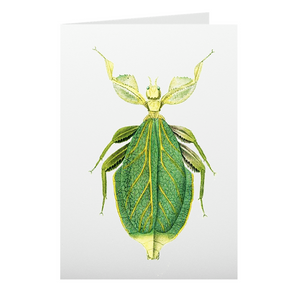 Leaf Insect Card