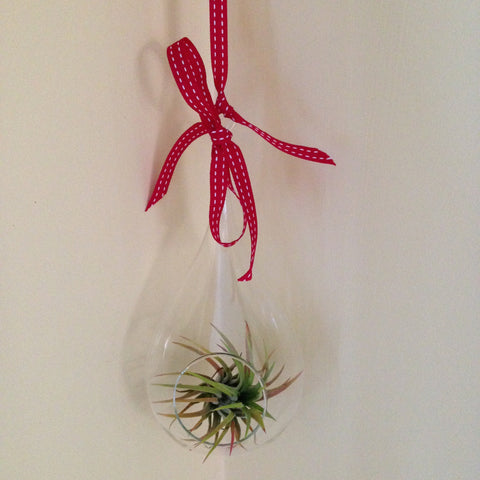 Air plant ornament: large teardrop B