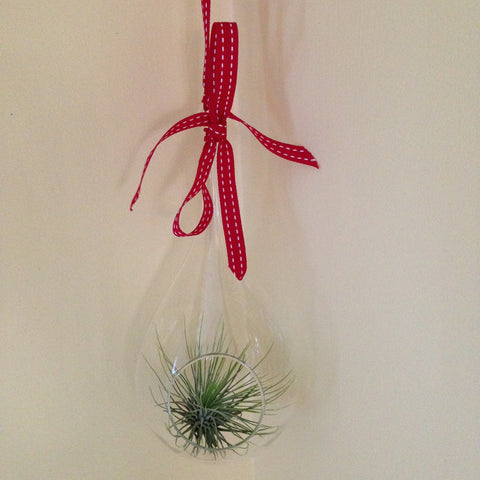 Air plant ornament: large teardrop C