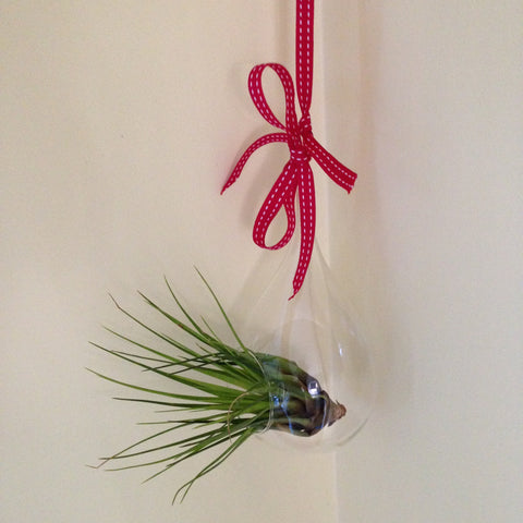 Air plant ornament: large teardrop E