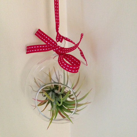 Air plant ornament: round B