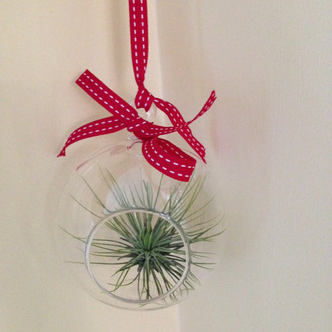 Air plant ornament: round C