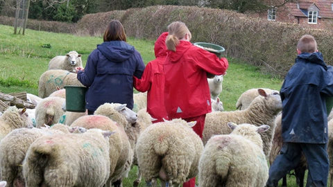 Children feeding sheep on a Farms for City Children Farm