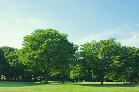 Image of a park with trees