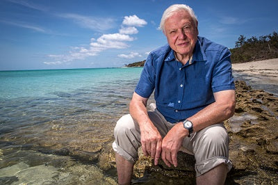 David Attenborough sitting on the beach