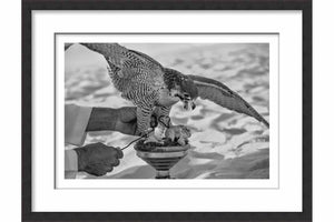 Framed Paper Falcon's Prey