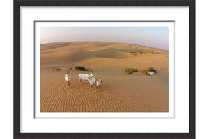 Framed Paper Oryx Family