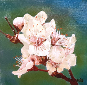 spring flower - Kate Knowles Artist
