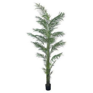 Potted Areca palm 3m