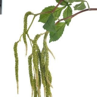 Amaranthus Spray Green 88cm