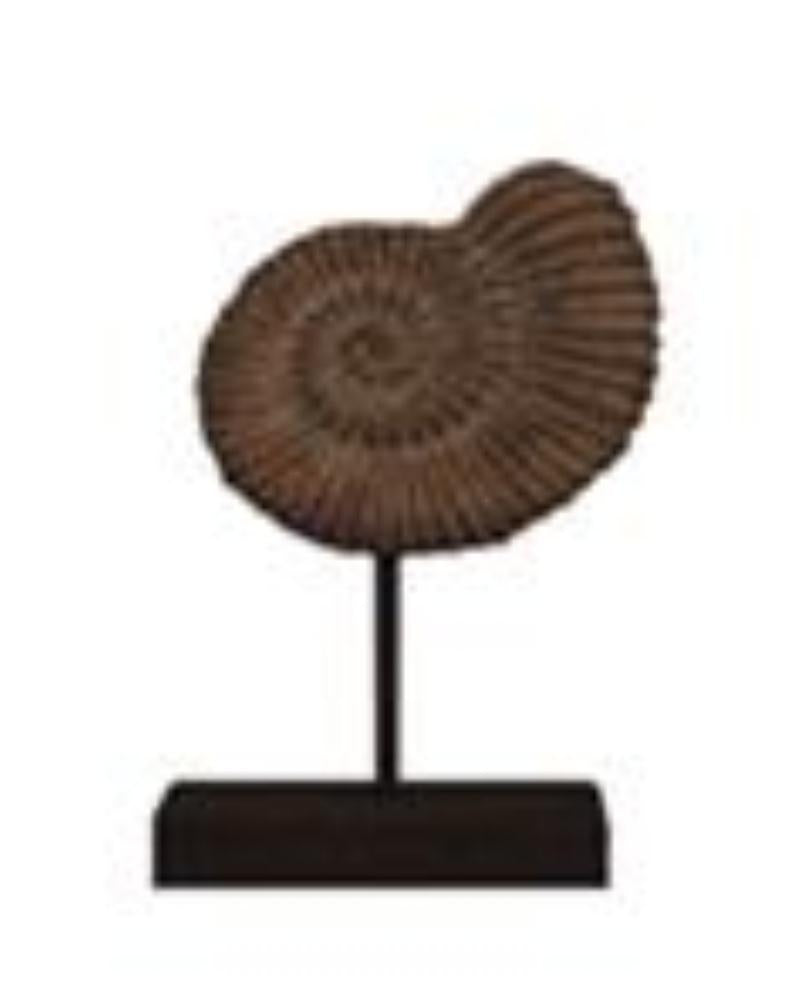 Fossil on stand Medium H32cm