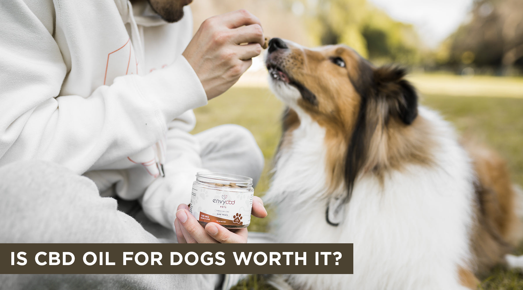 Is CBD Oil for Dogs Worth It?