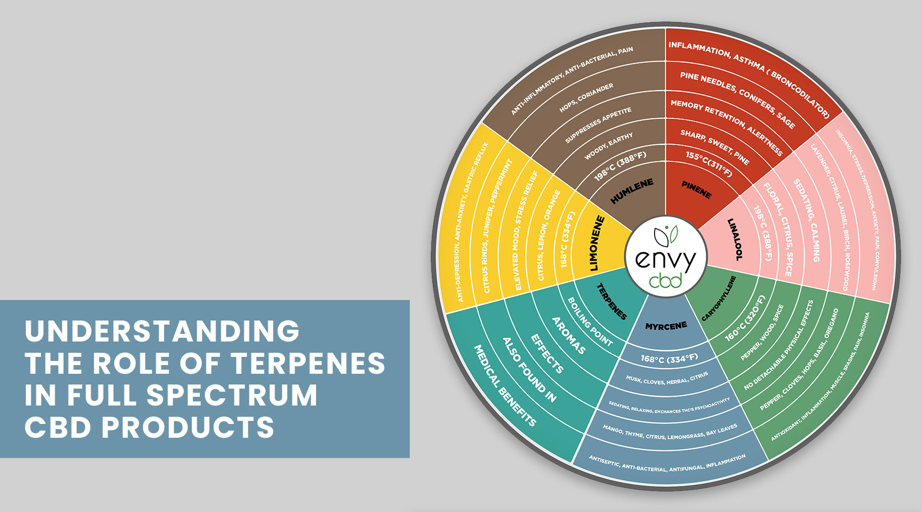 Understanding the Role of Terpenes in Full Spectrum CBD Products