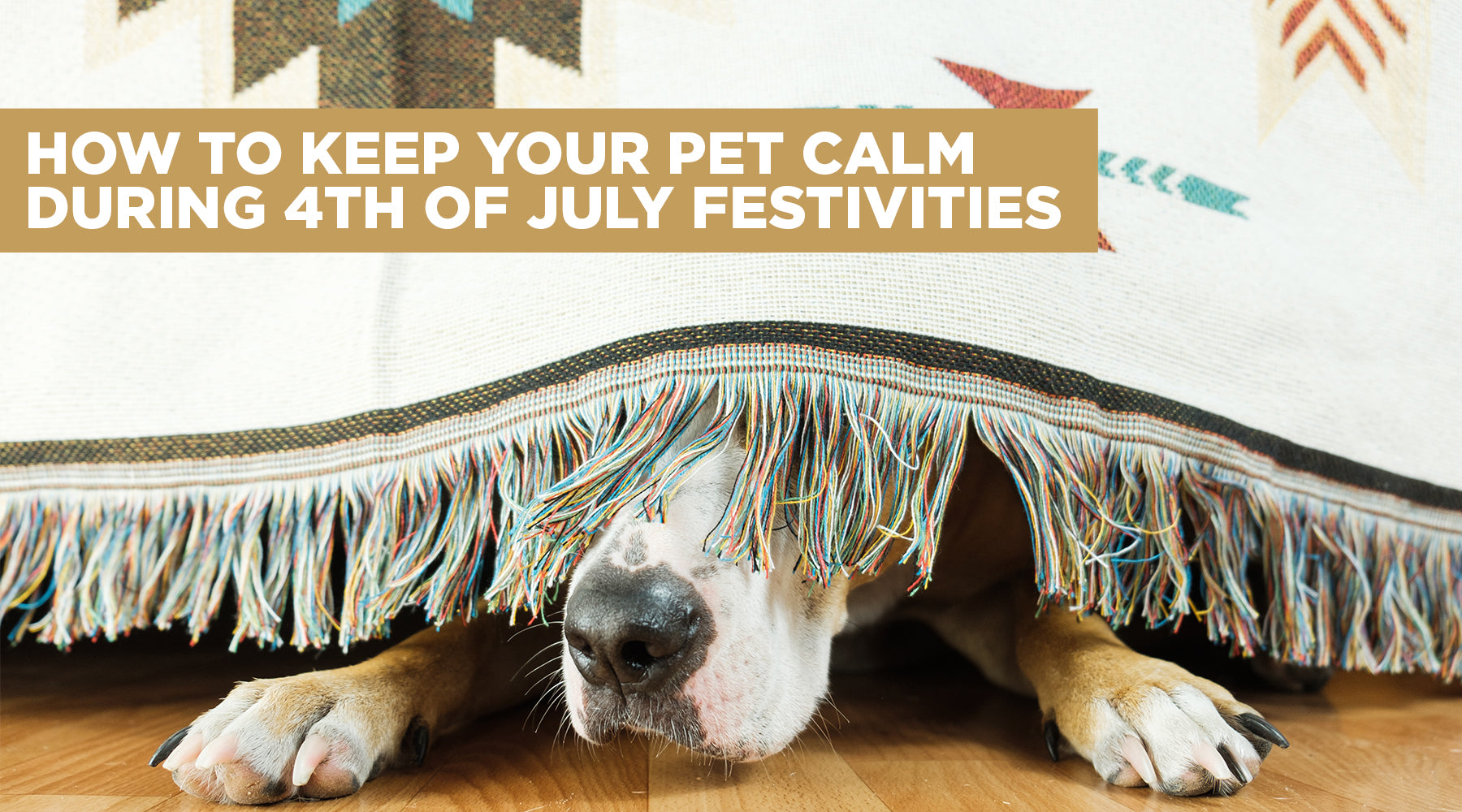 How to Keep Your Pets Calm During 4th of July Festivities
