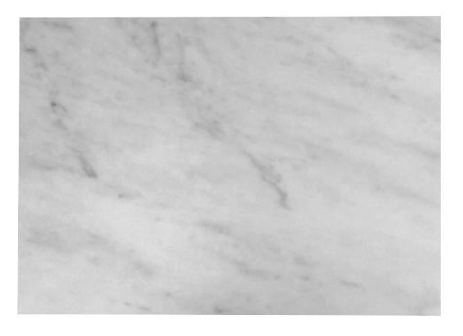 "Carrara Marble Italian White Bianco Carrera 3/4"" Marble Slab Polished"