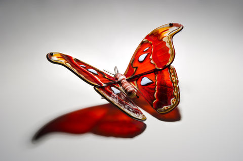 Picture of Laura Hart 'Atlas Moth'