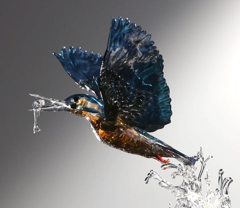 Kingfisher rising from water