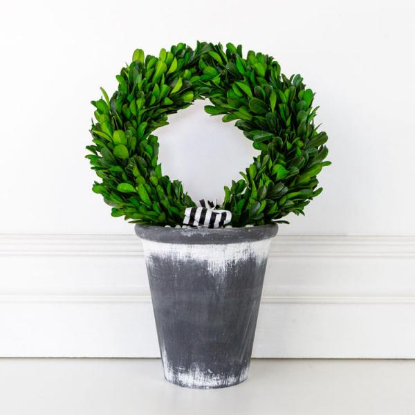 "8.25"" X 11.5"" X 8.25"" Boxwood Wreath in Pot - Bloom'n Things (4552967225425)"