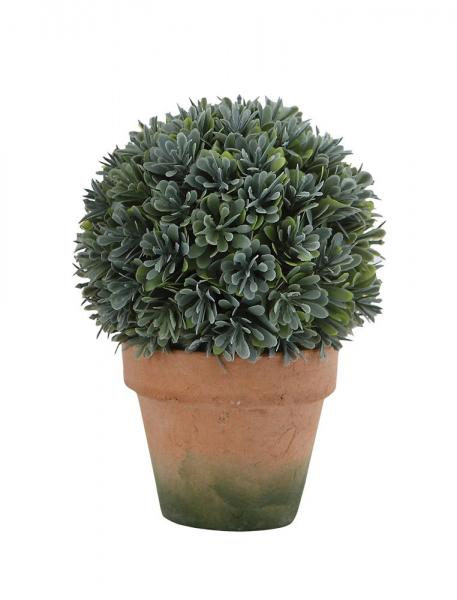 Round Boxwood Topiary in Clay Pot - Bloom'n Things
