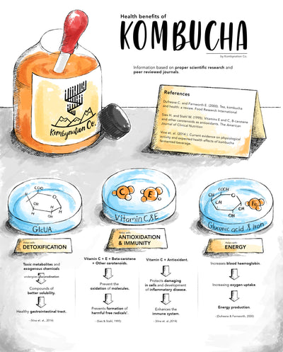 Infographic summarizing some of the potential benefits of drinking kombucha