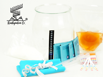 Kombucha brewing kit singapore