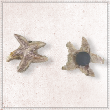 "Load image into Gallery viewer, 2"" Starfish Magnet"