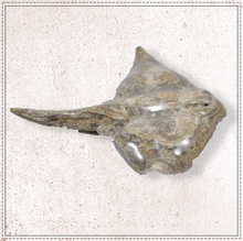 "Load image into Gallery viewer, 6"" Marble Stingray"