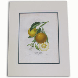 Botanical Book Prints
