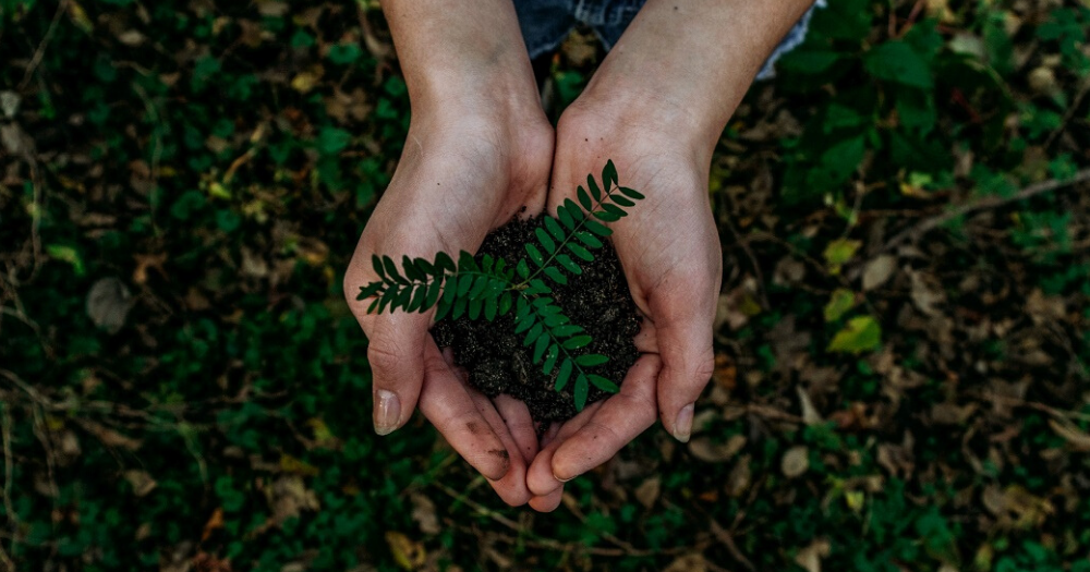 person holding earth and a plant in their hands