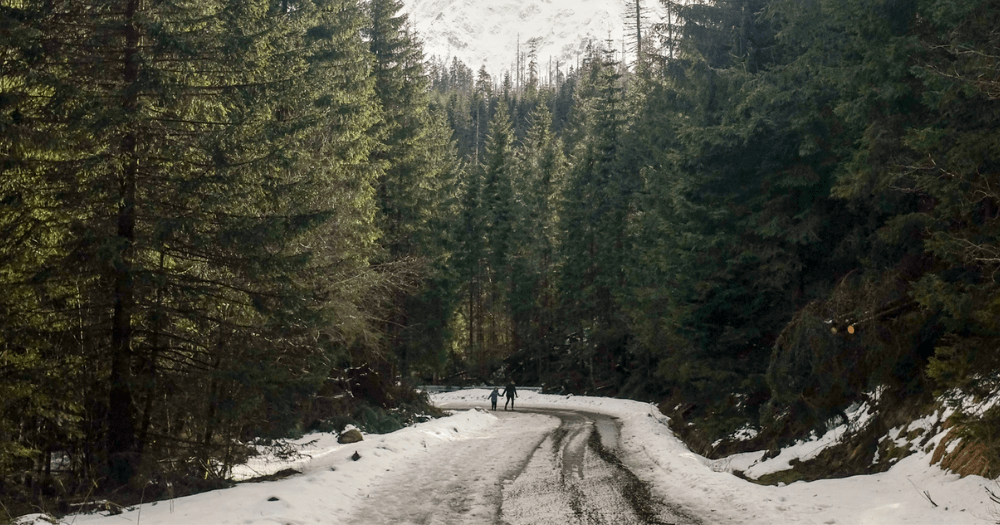 two people walking in the woods next to a road in the winter