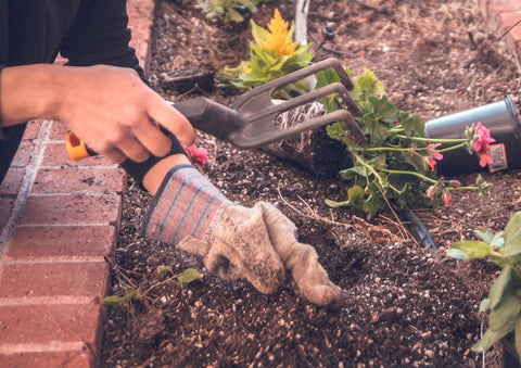 Person wearing garden gloves and holding gardening tool planting flowers in a garden bed.
