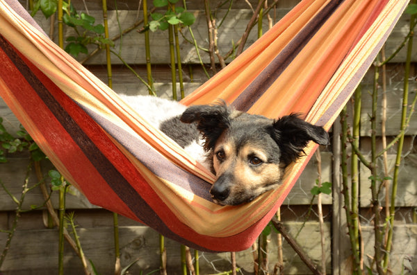 Mixed-breed dog lying inside orange and yellow hammock.