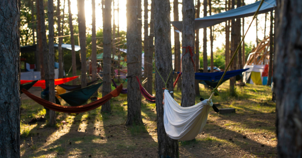 many hammocks hangingin inbetween trees on a campsite