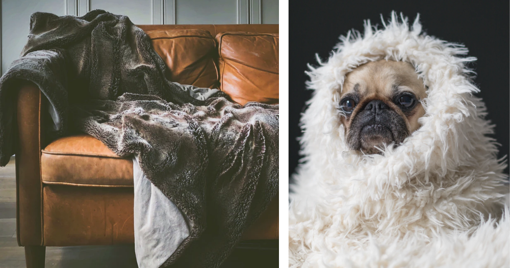 an image of a blanket on a couch and one of a dog wrapped in a blanket